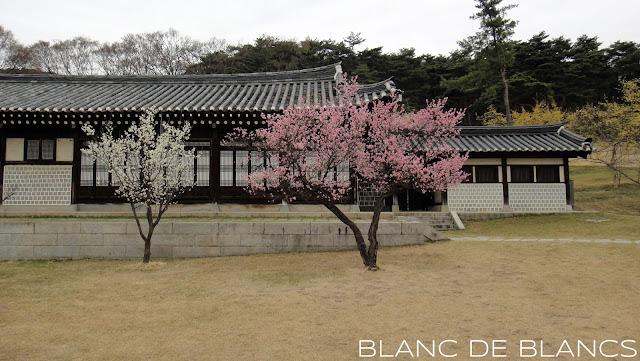 Etelä-Korea - www.blancdeblancs.fi