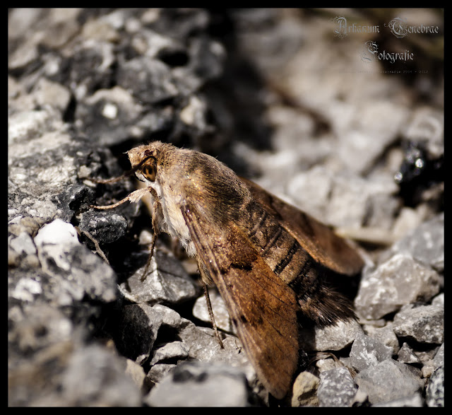 Eine Motte auf die auf dem Boden sitzt