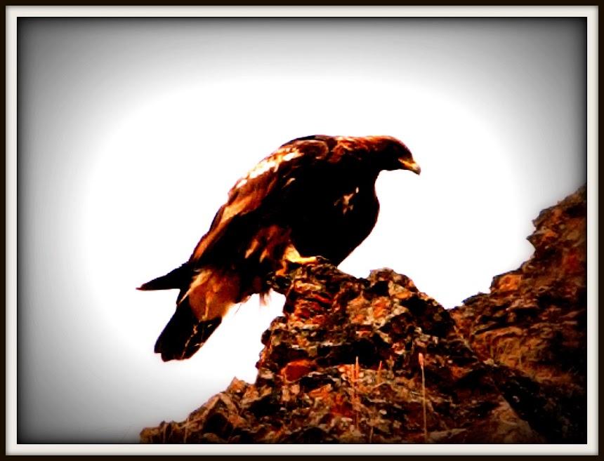 Ο αετός των Κραβάρων.