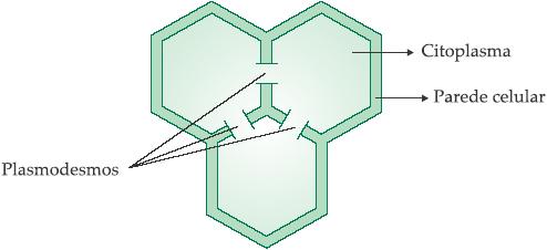 Parede celular - Funções e componentes