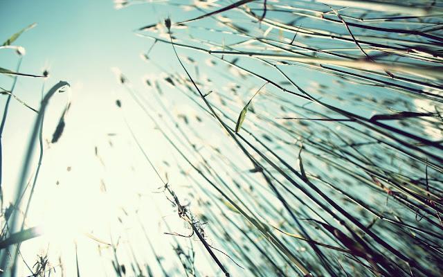 Cánh đồng cỏ đẹp tuyệt