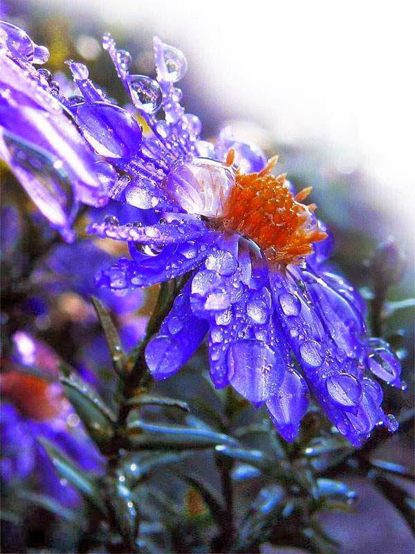 Encante como flores
