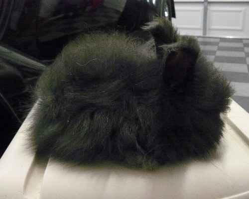 Funny Animals Funny Pictures Black Angora Rabbit Funny Pics