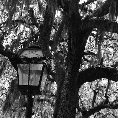 Spanish moss on Savannah oak trees