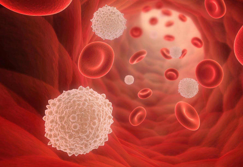 Повысить лейкоциты в крови в домашних условиях 448