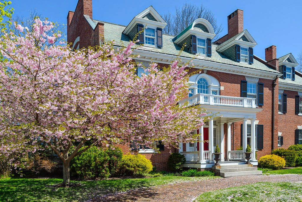 Spring in Portland Maine West End City Neighborhood House with Tree in Bloom May 2014 Photo by Corey Templeton