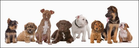 Most Famous Dogs Top 25 Most Popular Male And Female Dog Names