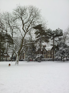 snow, park