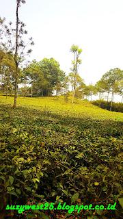Agrowisata Tanjungsari Wonosobo