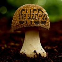 startup mushroom