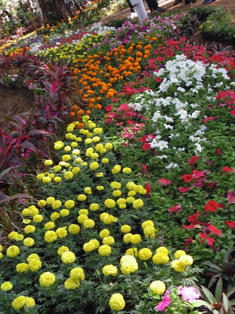 Flower Nursery In India - Classycloud co