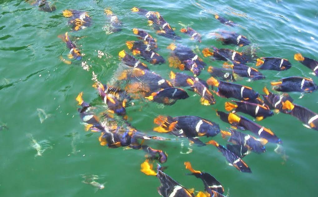 nadando con peces en Vallarta