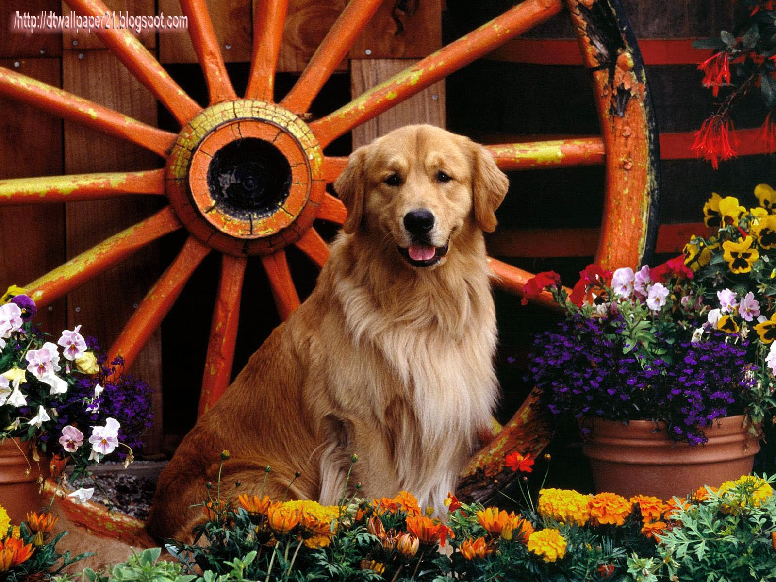 others, animal wallpaper, cool dogs, dog pictures, dogs,;