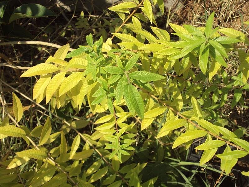 En torno al huerto jard n de arom ticas for Jardinera plantas aromaticas
