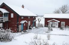 Björke i vinterskrud