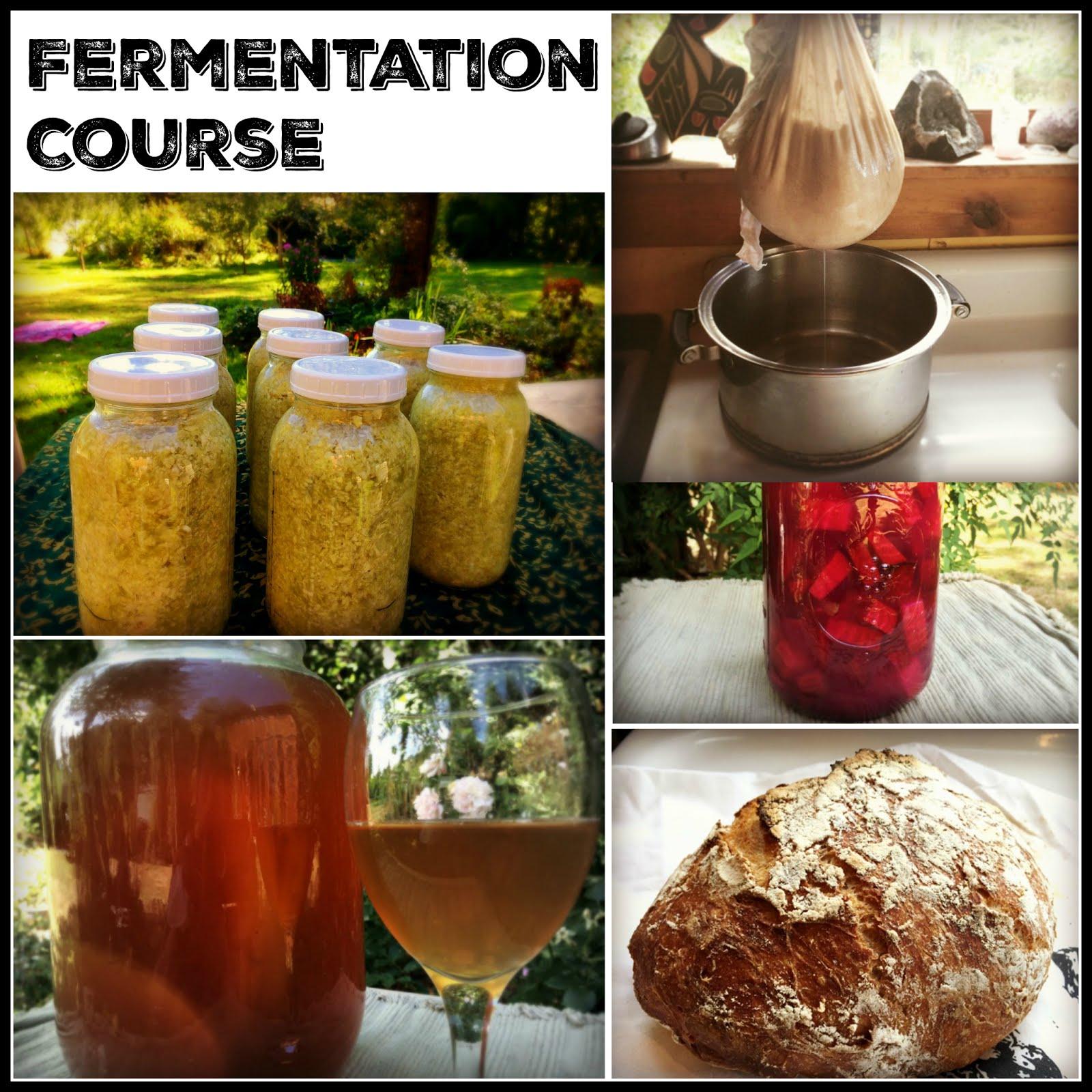 Online Fermentation Course