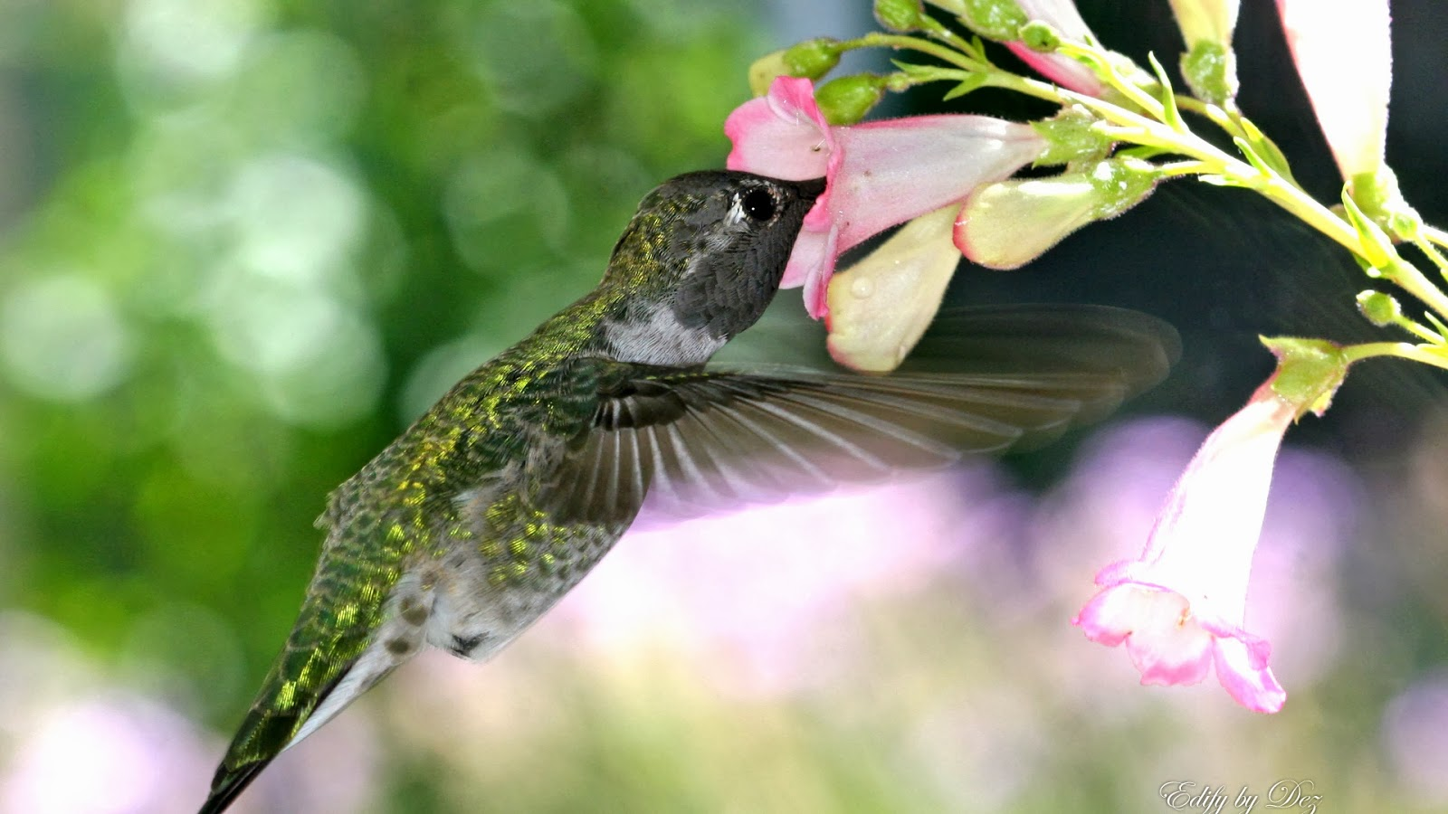 hungry humming bird