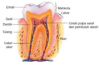 Bagian dari Gigi