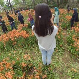 Bunga Lily Gunungkidul Terinjak