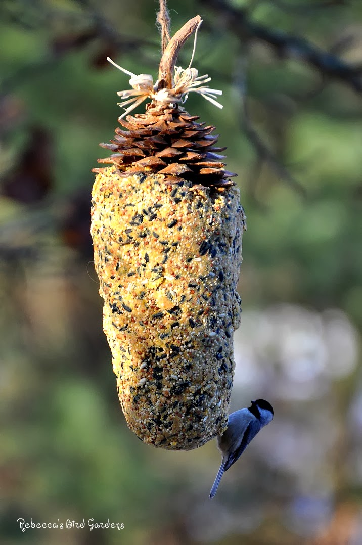 how to clean pine cones for birds