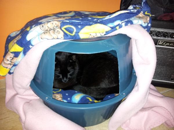 Querido ref gio blog de decora o cama de gato e de - Casas para gatos baratas ...