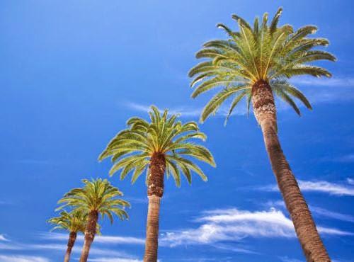 Palmen, eine gefährdete Gattung
