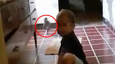 Screencap from the video where an 'elf-like' creature was caught on camera