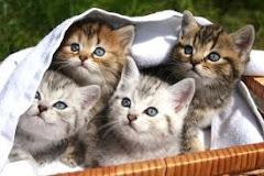 <<<---Katzes--->>> <<<---Google--->>> <<--Übersetzer-->>