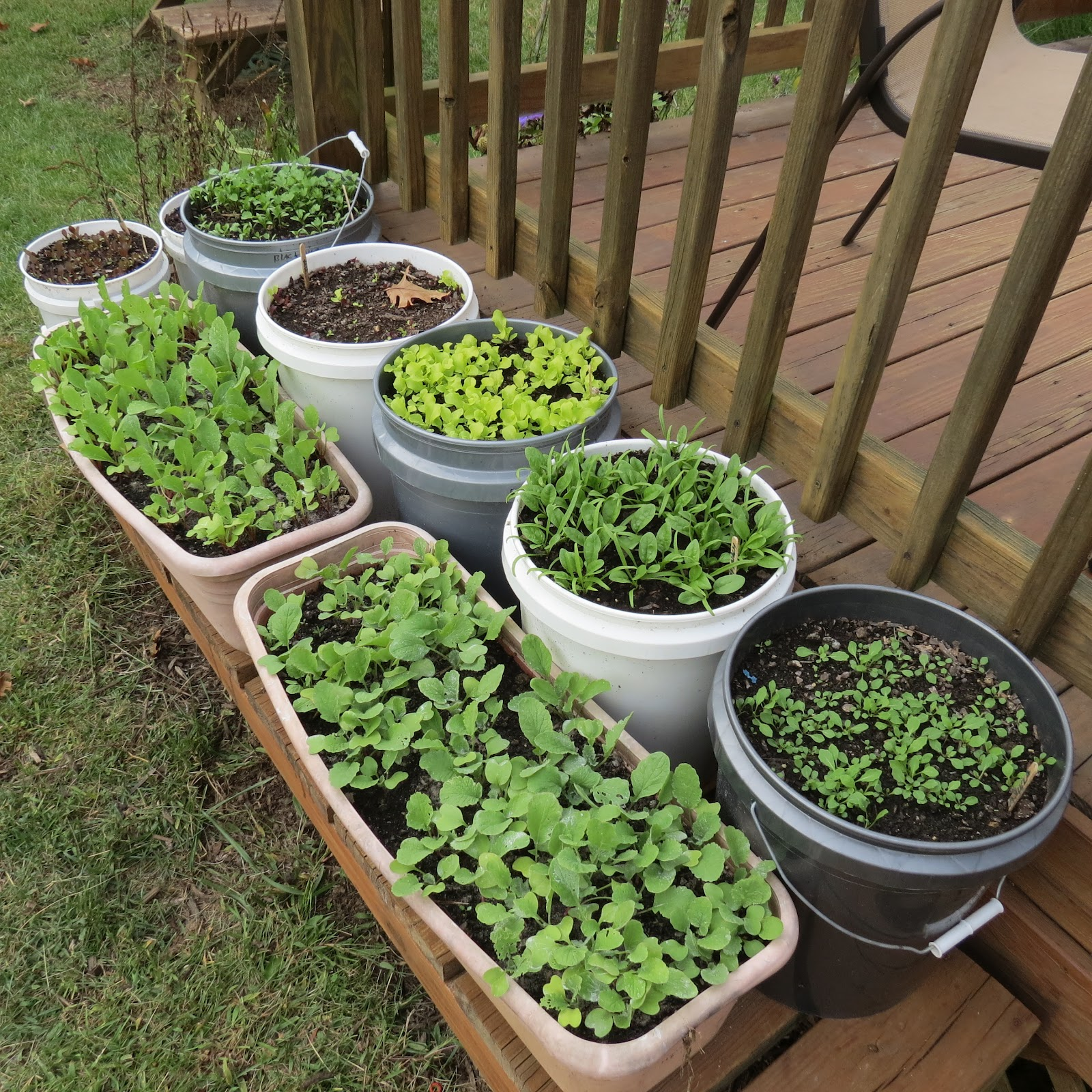 The rusted vegetable garden - Containers for vegetable gardening ...
