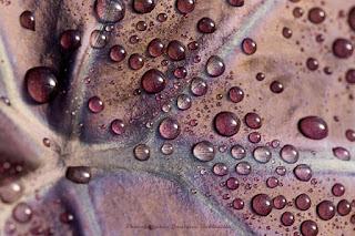 photo nature macro artistique masson botanix