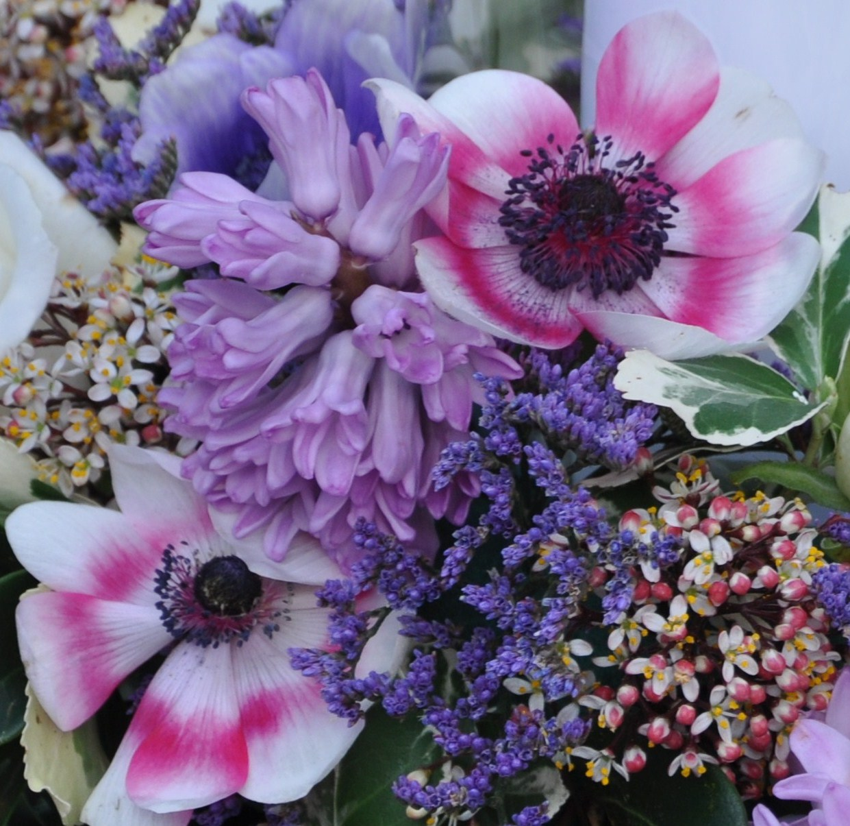 Helen Jane Floristry Favourite Flower for March Anemone