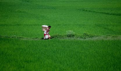 Guiné-Bissau: Projeto de irrigação para mil hectares para fazer face a alterações climáticas