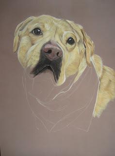 étape peinture labrador