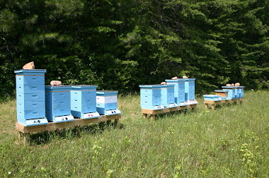 Field Apiary