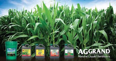 farm, crop, harvest, organic