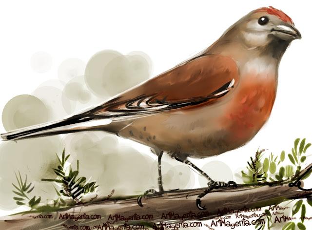 En  fågelmålning av en  hämpling  från Artmagentas svenska galleri om fåglar