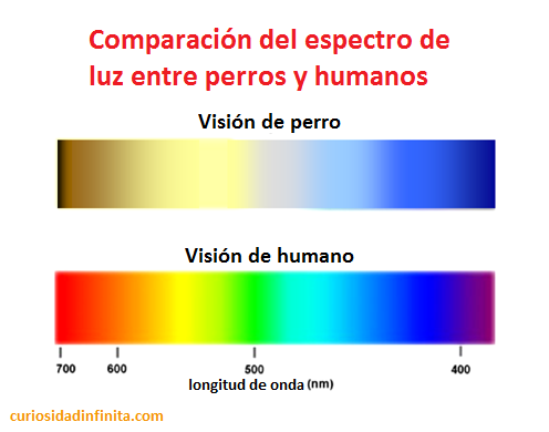 espectro de luz, humanos y perros, los perros ven en blanco y negro