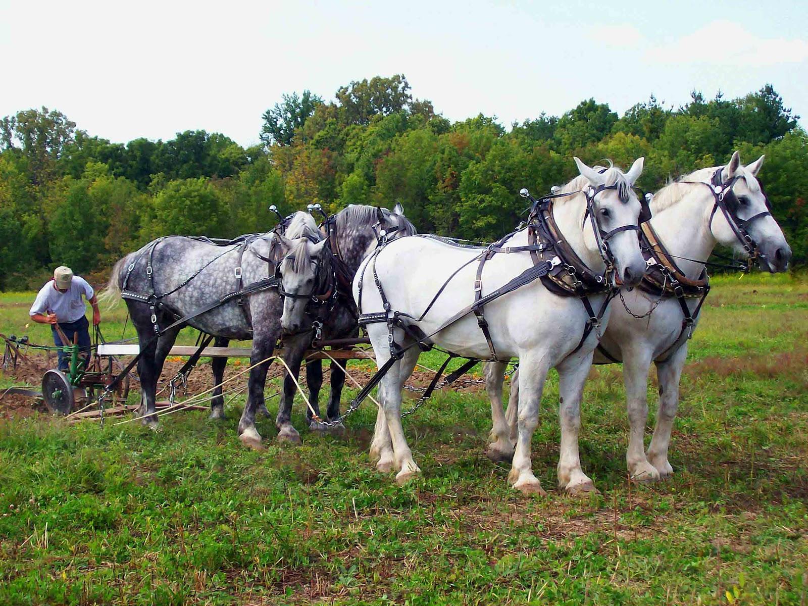 http://1.bp.blogspot.com/-6lQLufReoV0/Tzw-rFT3FWI/AAAAAAAAAoQ/KrZO8m82vFk/s1600/Four+White+Horses.jpg