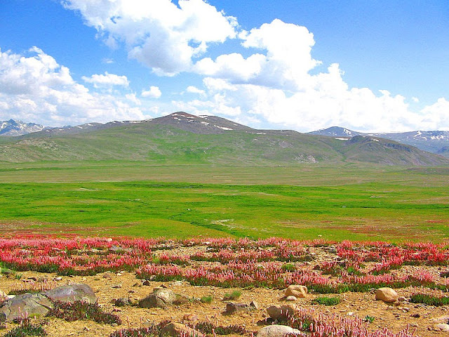 Deosai National Park