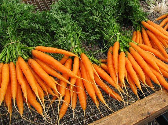 Eat Live Grow Paleo: Vegetables : Carrots