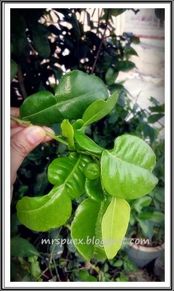 http://mrspuex.blogspot.com/2015/03/contest-petua-dan-herba.html