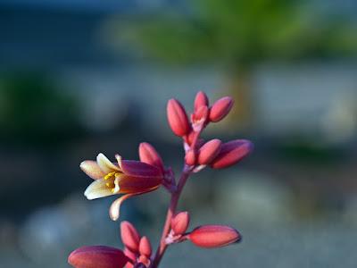 Kim Young-ha, Czarny kwiat, Okres ochronny na czarownice, Carmaniola