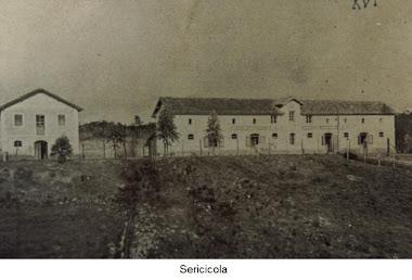 SERICICOLA