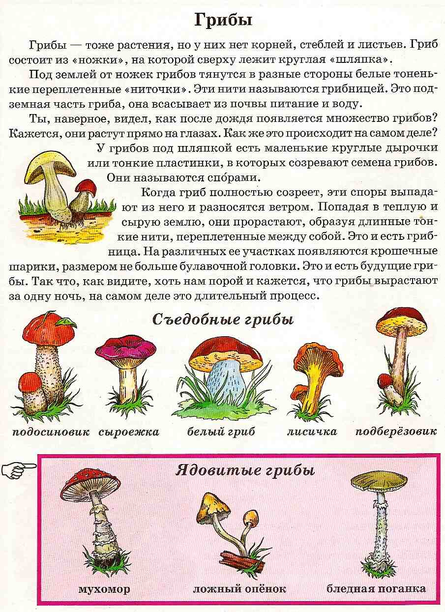 Сообщение о грибах для 3 класса