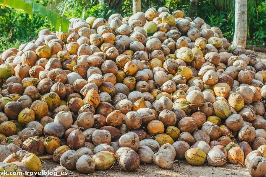 Море кокосов