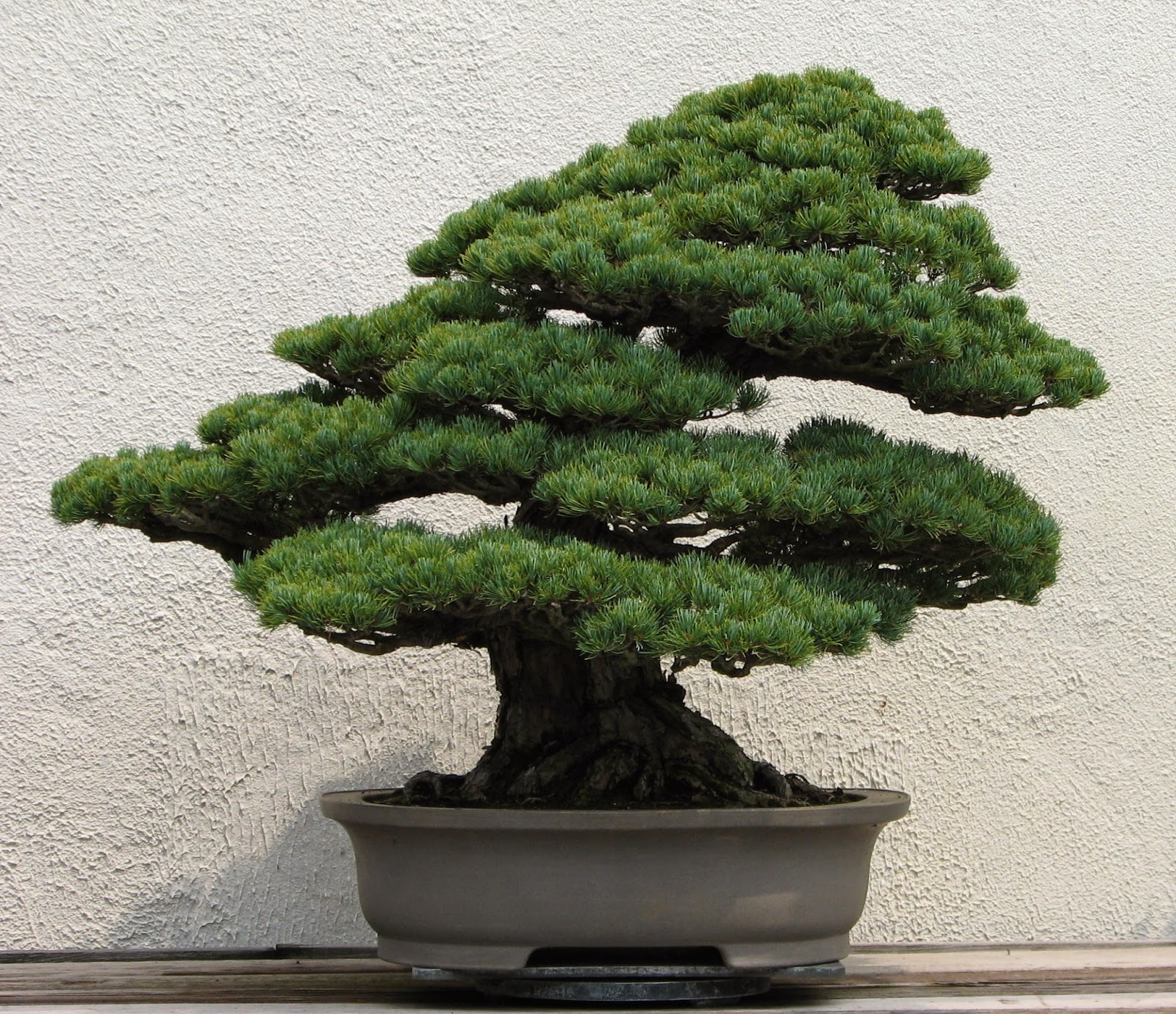 Trees Bonsai Tree