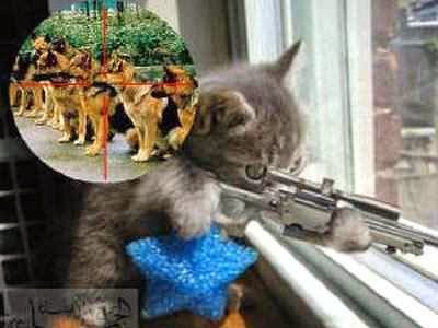 Gambar kucing lucu sedang menembak