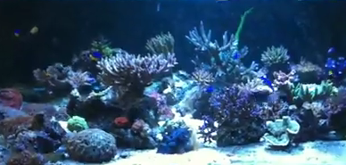calcium rich reef tank