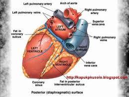 askep katub jantung, pengertian katub jantung, kelainan katub jantung