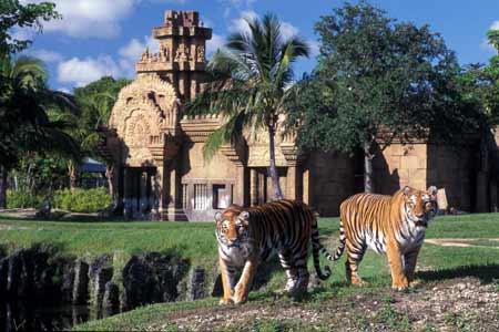 Zoológico de Miami - Miami Zoo